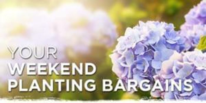 50% off colour & veg  get growing this weekend at Wyevale Garden Centres