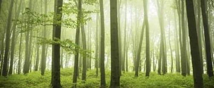 Forest Retreat Spa Break from £169 Per Person