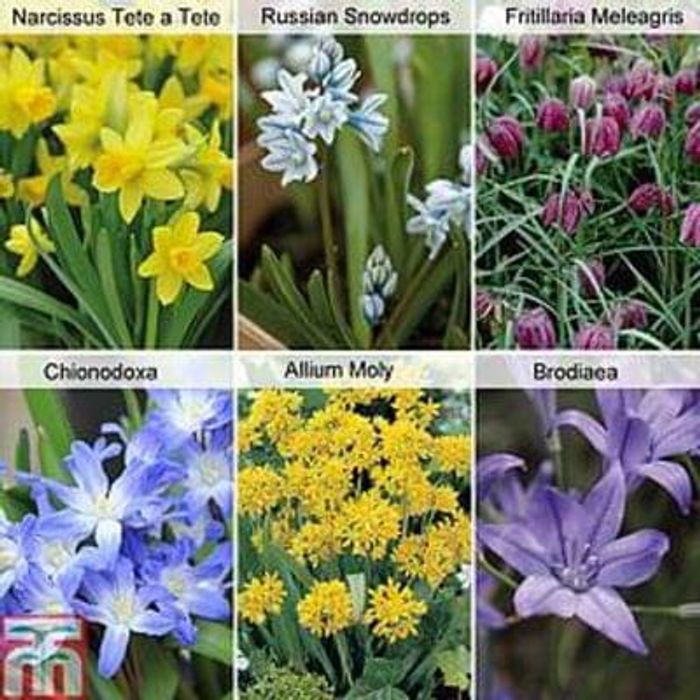 150 FREE* spring-flowering bulbs (Just pay postage)