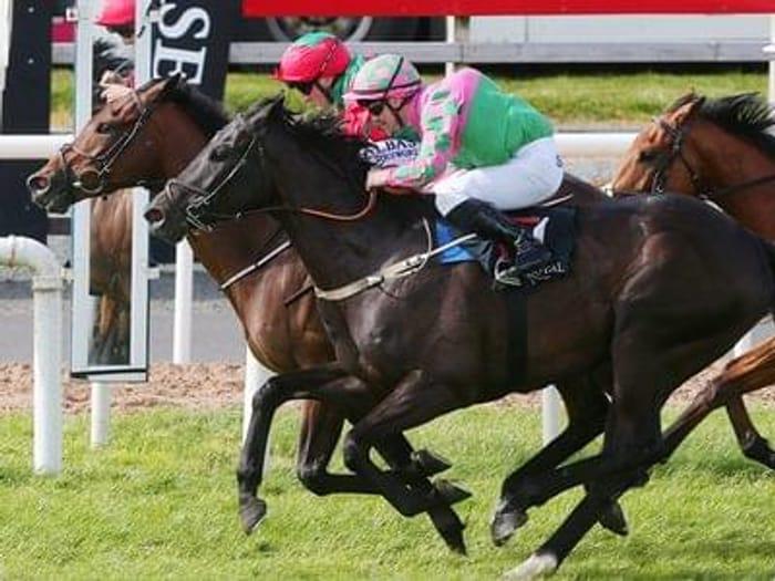 Half price Down Royal Racecourse