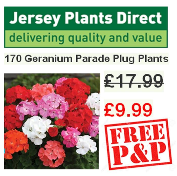 170 Geranium Parade Plug Plants Only £9.99 with FREE P&P (SAVE £8)