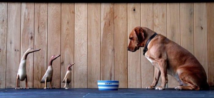 20% off Dog Bowls