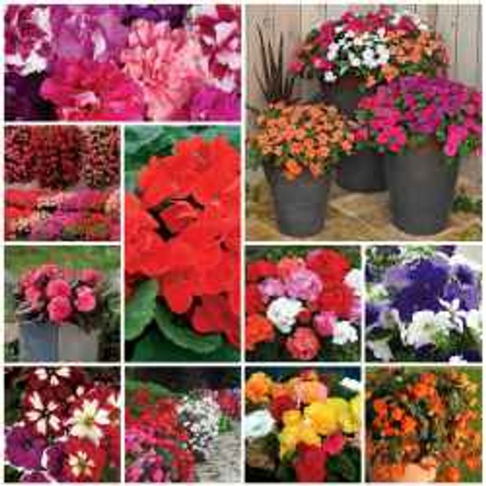 70 Garden Ready Plants