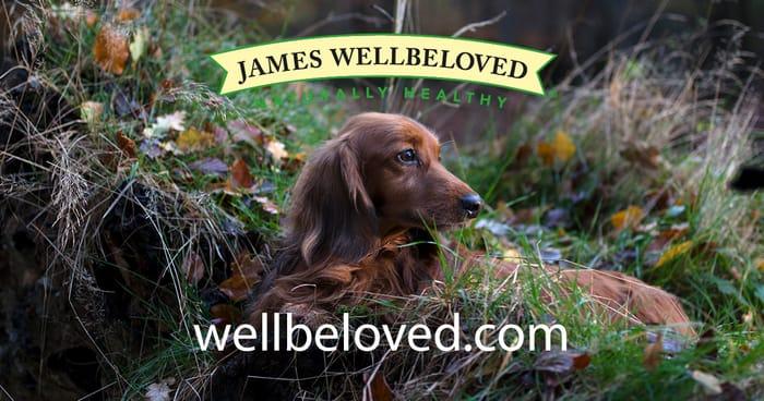 Free Jameswellbeloved Puppy Food
