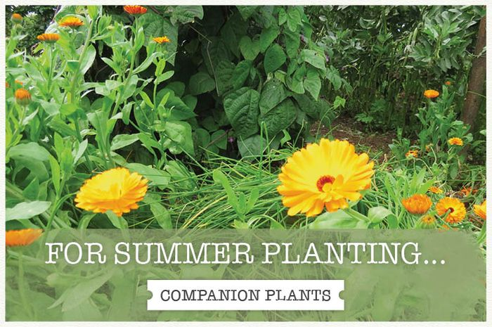 30% off Fruit and Herb Plants