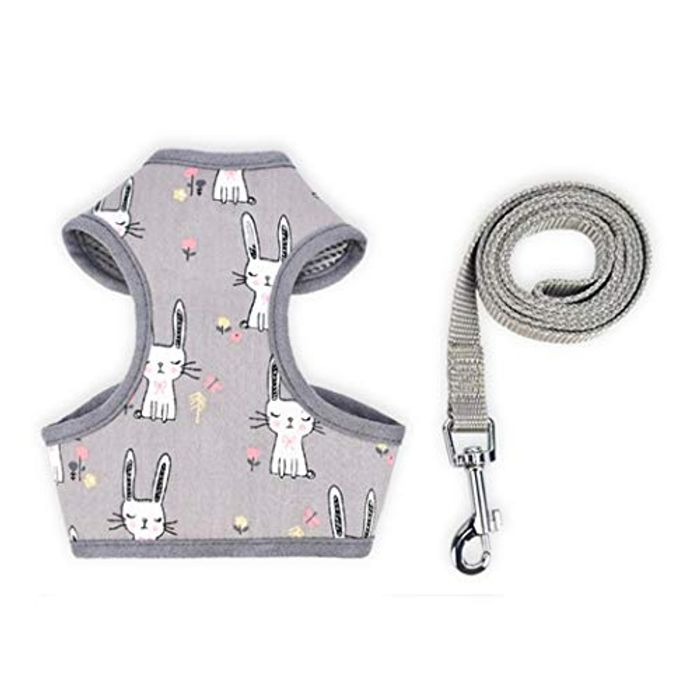 80% off Cute Dog Harness and Lead