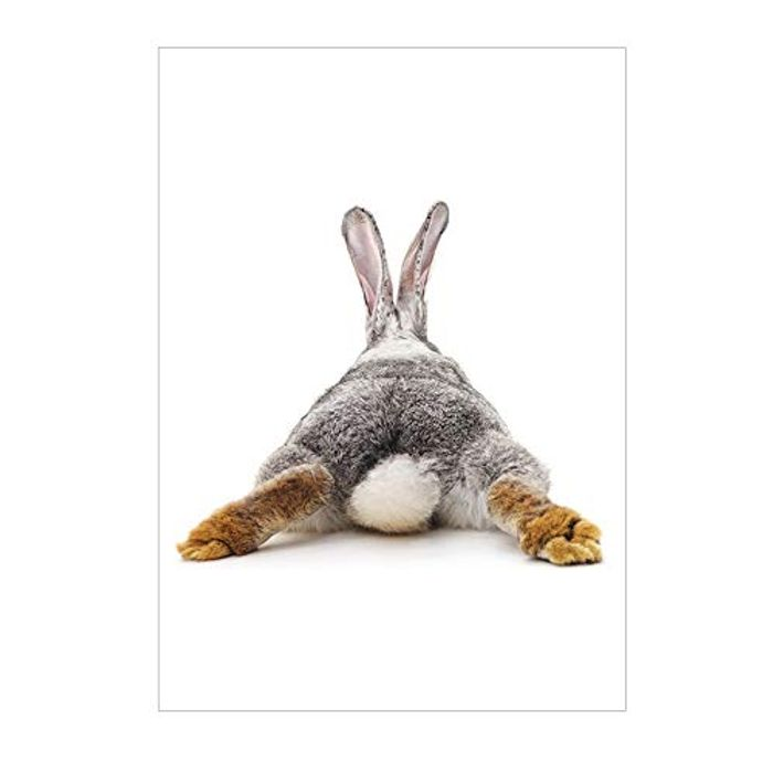 Bunny Fluffy Butt Pictures £1.18 Inc Delivery