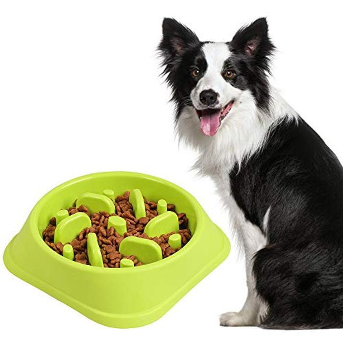 Pets Slow Feeder Bowl