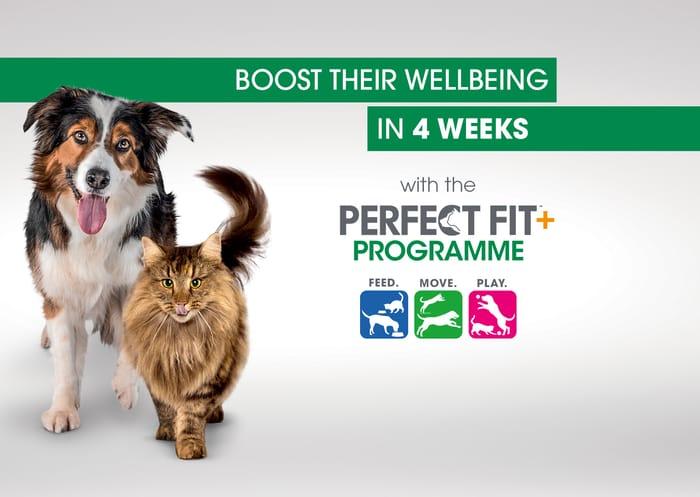 Free Fit Pet Programme