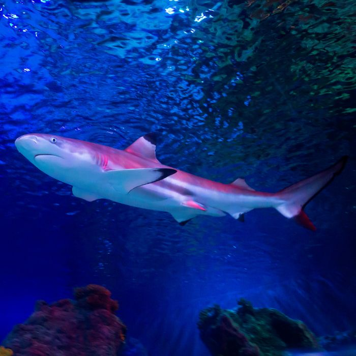Grand Children Go FREE at the Sea-Life Centres This Weekend!