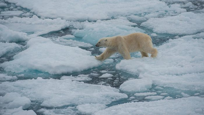 15% off Realm of the Polar Bear Bookings