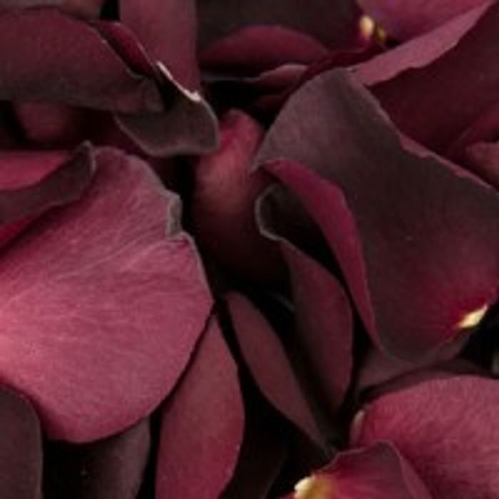 Free Petal Samples £1 Shipping ( Refundable on First Order )