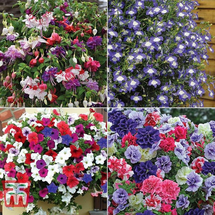 Lucky Dip Hanging Basket Plant Collection - 64% Off with Code