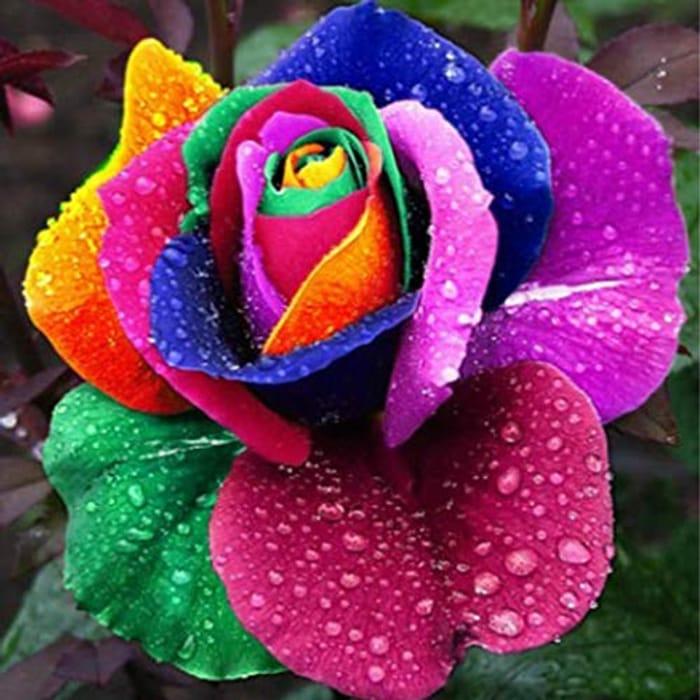 Oplon 100pcs/ Bag Multicolor Rose Flower Seeds Garden Flower Plant Flowers