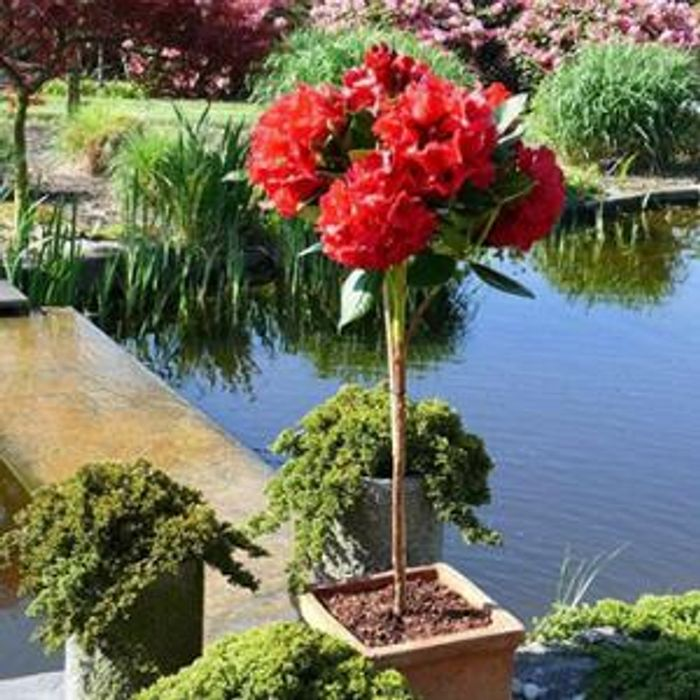 £10 off Orders over £50 at Gardening Express