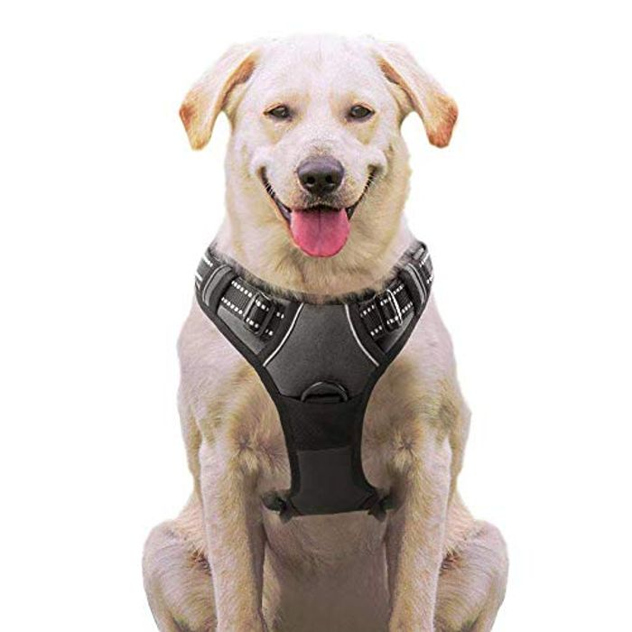 Large Size Dog Harness with Prime Delivery