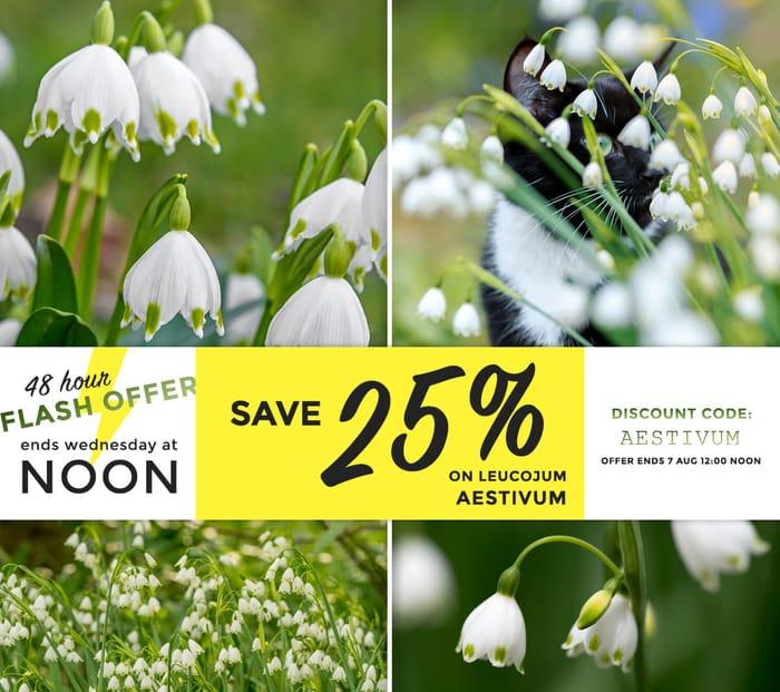 Farmer Gracy Flower Bulbs - save 25% on Summer Snowflakes