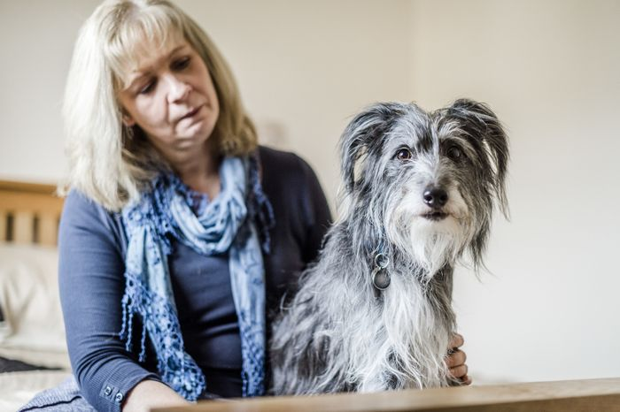 FREE Pet Bereavement Support Leaflets from the Blue Cross by POST