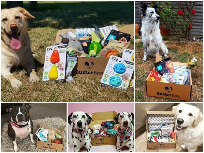 Join the BusterBox Club for FREE! Free Treats Box