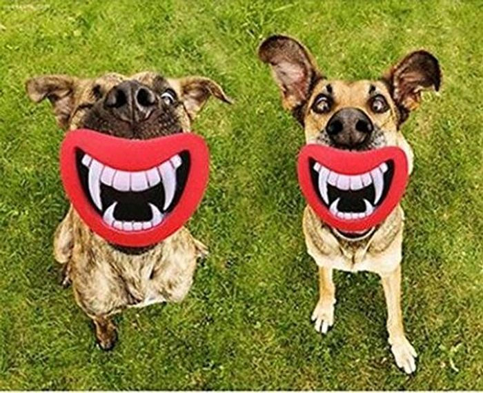 Novelty Dogs Play Toys - Mouth and Teeth