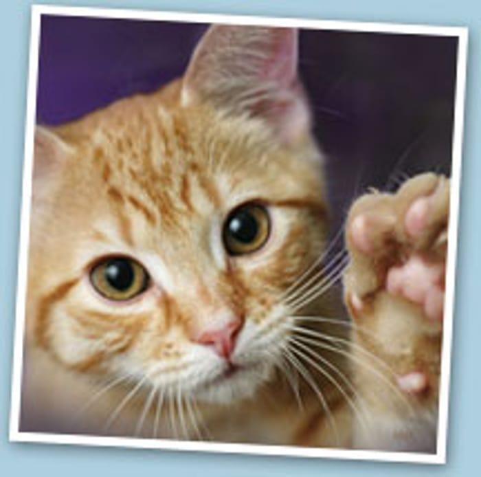 4 Weeks Free Petplan Pet Insurance Trial