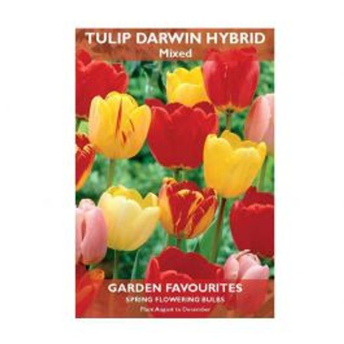 Tulip Darwin Hybrid Mixed Bulbs 6 Pack