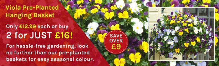 Buy 2 or More Packs of Garden Ready Plants & save £2.50 on Each Pack
