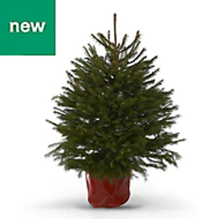 B&Q Christmas Clearance Now on - Includes Selected Real Trees
