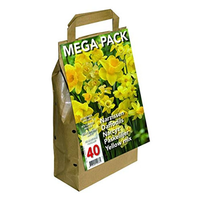 Greenbrokers Limited (Pack of 40) Big Buy Value Pack-Yellow Daffodils Narcissus