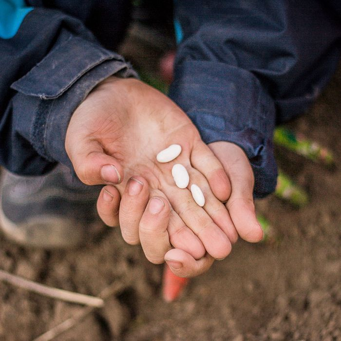 Little Seedlings Club at Dobbies: February Workshop - Grow Your Own Food