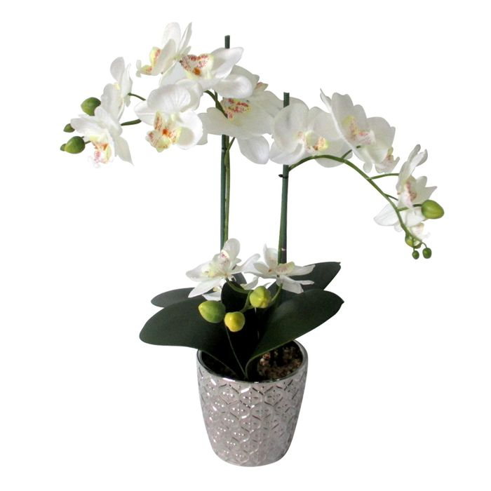White Orchid in Silver Dimpled Pot