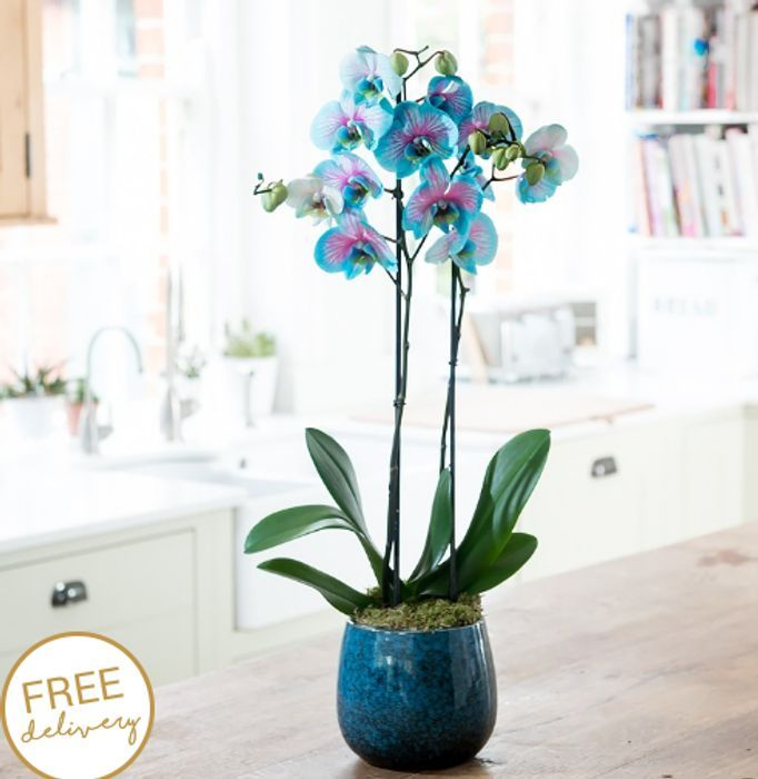 15% off All Plants at Blossoming Flowers and Gifts