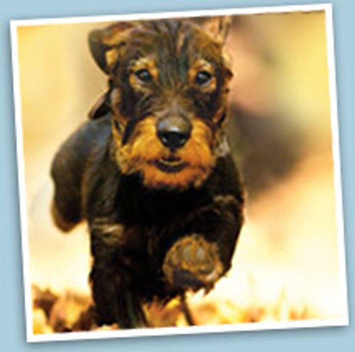 4 Weeks Free Petplan Pet Insurance.