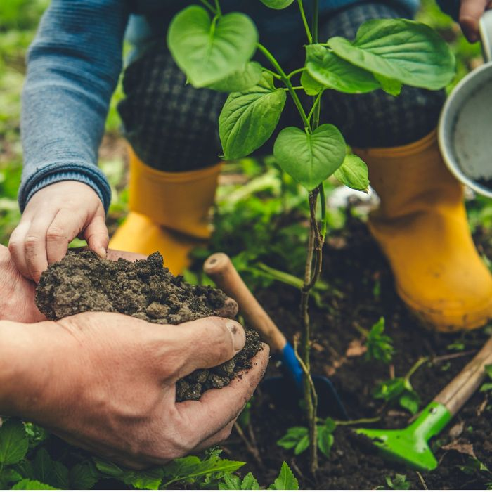 Little Seedlings Club: March Workshop - the Secret Life of Roots at Dobbies
