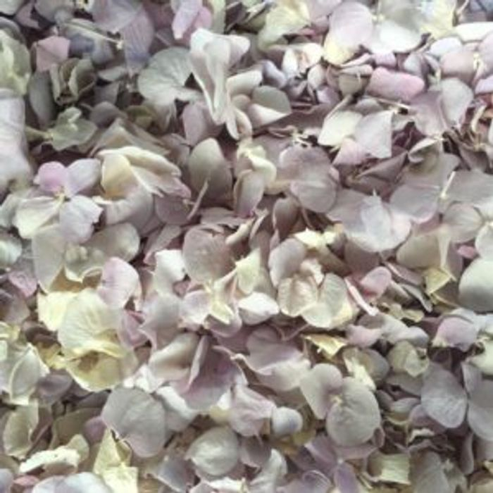 Free Petal Confetti Sample