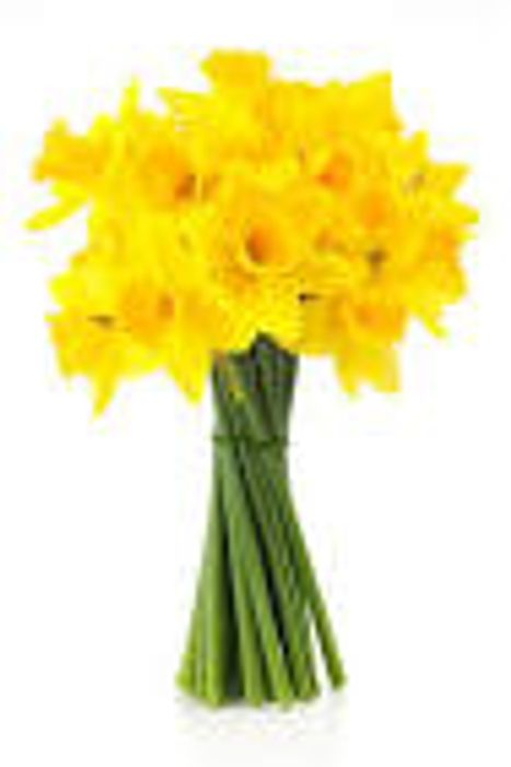 Daffodils Buy 2 Bunches for £1.50