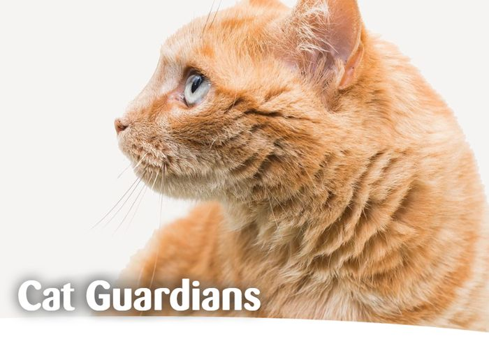 Info From Cat Guardians FREE Service 'If You Die Before Your Pet' *FREE BY POST