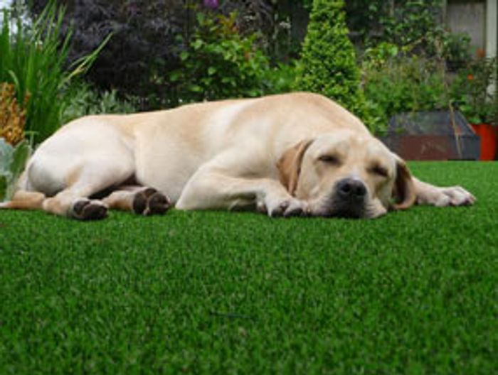 FREE Artificial Grass Sample Pack