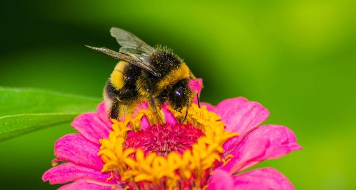 Save Our Bees !!! Apply for Your Free Seeds ( S.A.E REQUIRED )