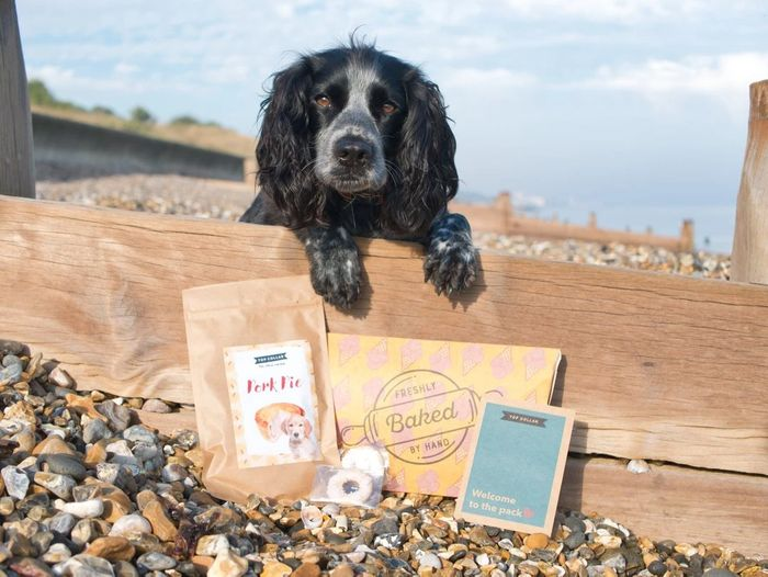 Dog Treat Subscription First Box Free !!!