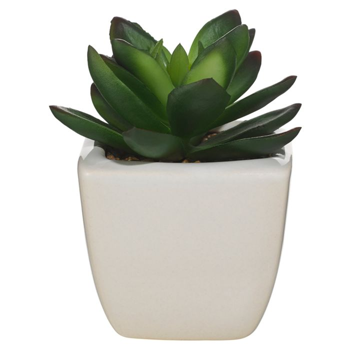 Small Succulent Cats Eye From Tesco