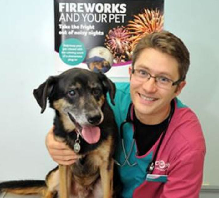 Help Manage Your Pets Anxiety By Reading The Free Fireworks Guide From The PDSA