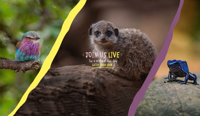 Enjoy a Virtual Zoo Day at Chester Zoo!