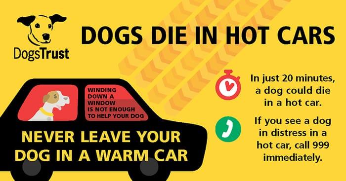 Free Dogs Die in Hot Cars Window Sticker