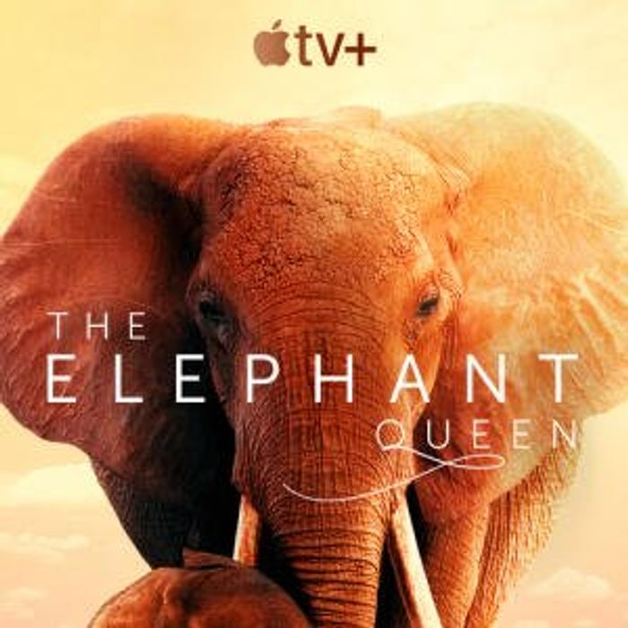 Apple TV Free Streaming (e.g the Elephant Queen, Snoopy in Space, for All