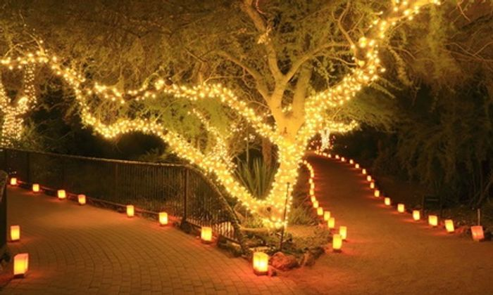 Up to Four Strings of 50, 100 or 200 LED Solar-Powered Fairy Lights