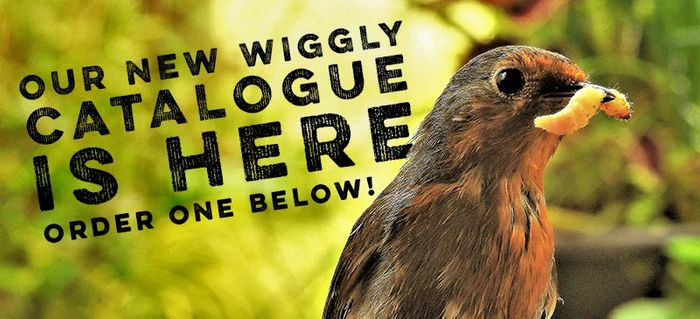 Get Our Latest Wiggly Catalogue