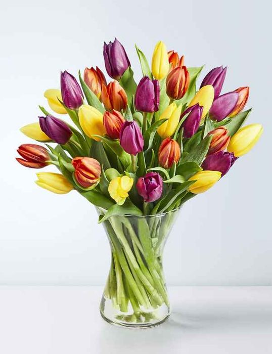 Free Delivery on M&S Flowers & Plants
