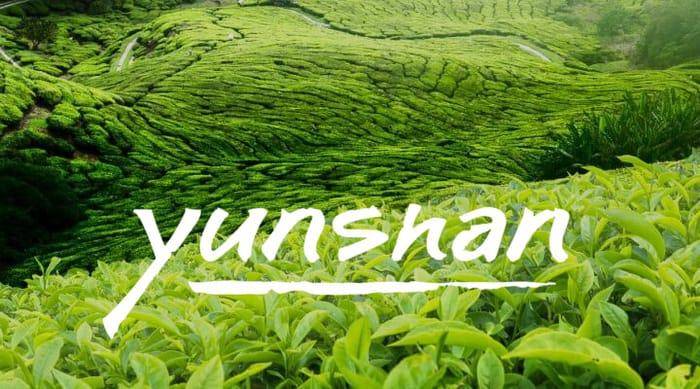 Free Sample of loose leaf organic tea from Yunsham. No P&P