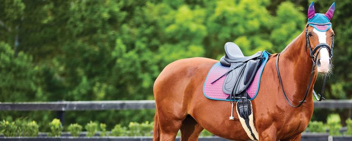 £5 off First Orders over £50 at Naylors Equestrian
